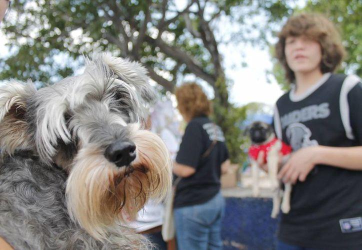 Al mes una persona invierte para la alimentación de un perro mediano en promedio 599 pesos mensuales. (Israel Leal/SIPSE)