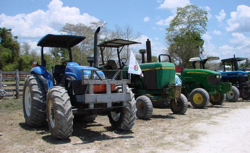 El municipio tiene abandonadas todas las áreas de cultivo, aseguran. (Manuel Salazar/SIPSE)