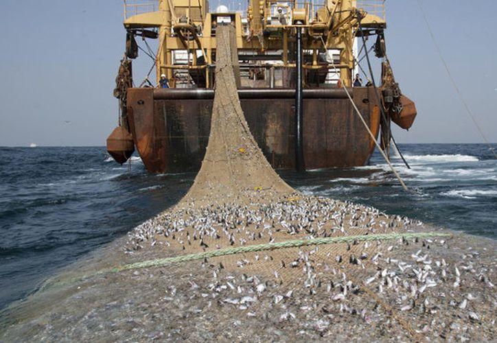 La pesca ilegal genera la existencia de riesgo inminente de daño o deterioro grave a la vida silvestre o a su hábitat. (Contenido/Internet)