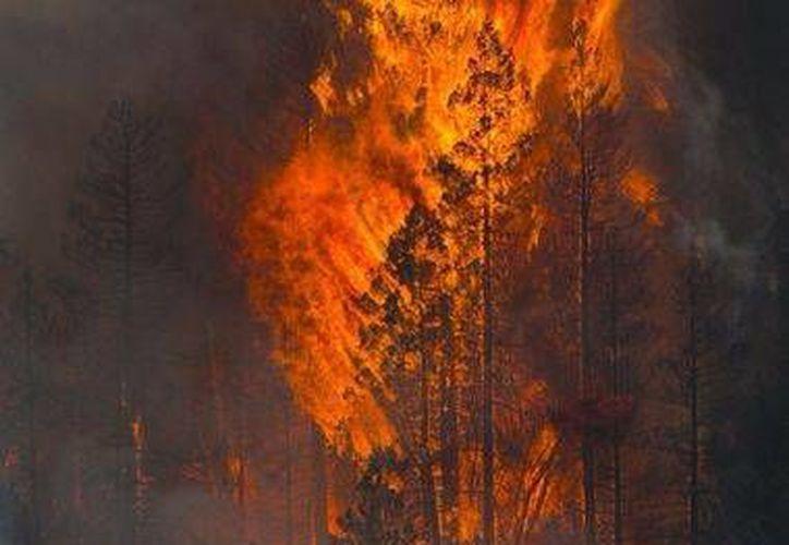 Las llamas consumen varios árboles en el cañón Oak Creek en Sedona, Arizona. (AP/Patrick Breen)