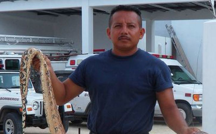 Capturan a una boa dentro del agua | Novedades Quintana Roo - Sipse.com