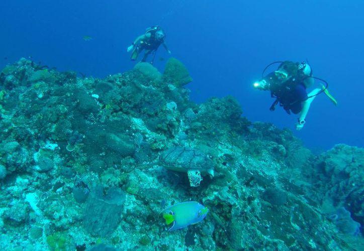 La mayor cobertura de corales en el último reporte de 2015 fue en la Isla de Cozumel. (Jesús Tijerina/SIPSE)