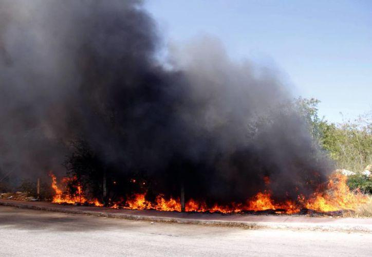 El 99 por ciento de los incendios que se han combatido tuvieron su origen en las actividades humanas. (SIPSE)