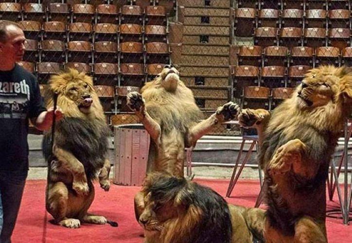 El incidente reveló las penosas condiciones a las que eran sometidas los leones.  (Foto de contexto/Archivo/Reuters)