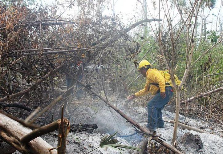 El incendio consumió 3.34 hectáreas de pastizales de la comunidad de González Ortega y Nachicocom. (Redacción/SIPSE)