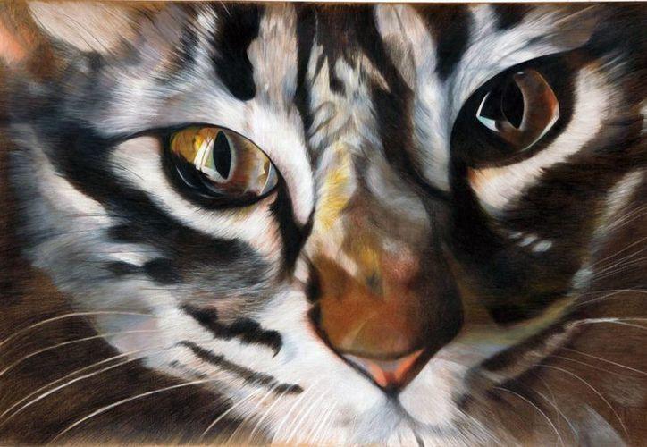 """El pintor José Luis Loría bautizó como """"La cofradía de ojos"""" su más reciente obra: La mirada de una serie de gatos en gran formato. (SIPSE)"""