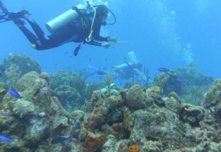 En México, los sistemas arrecifales más importantes son los situados en el Golfo de México, Mar Caribe, Océano Pacífico, Península de Baja California, y las costas de Nayarit, Jalisco y Oaxaca. (SIPSE)