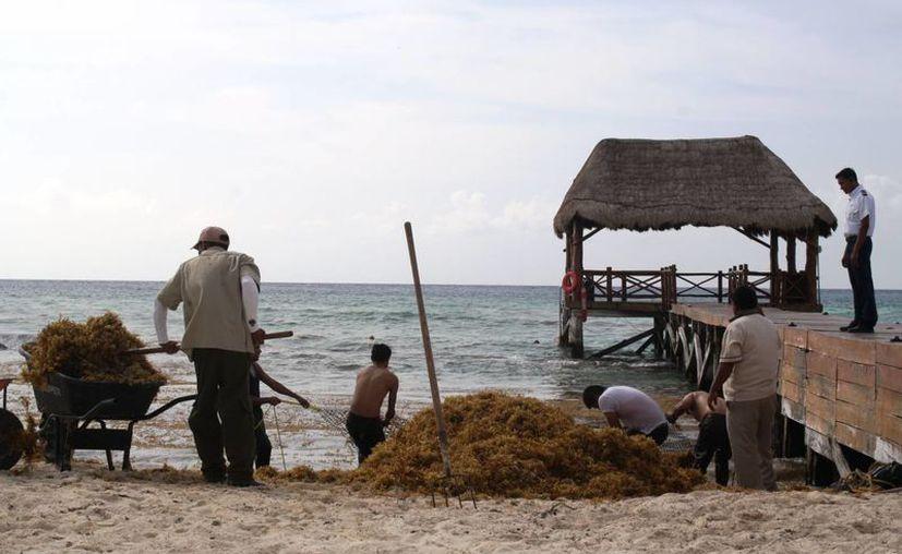 Serán 950 personas las que, como parte del Programa de Empleo Temporal, se sumarán a la limpieza de las costas solidarenses. (Octavio Martínez/SIPSE)