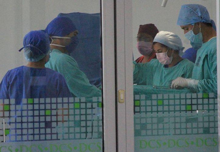 Estudiantes de medicina realizarán las operaciones a mascotas gratis. (Ángel Castilla/SIPSE)
