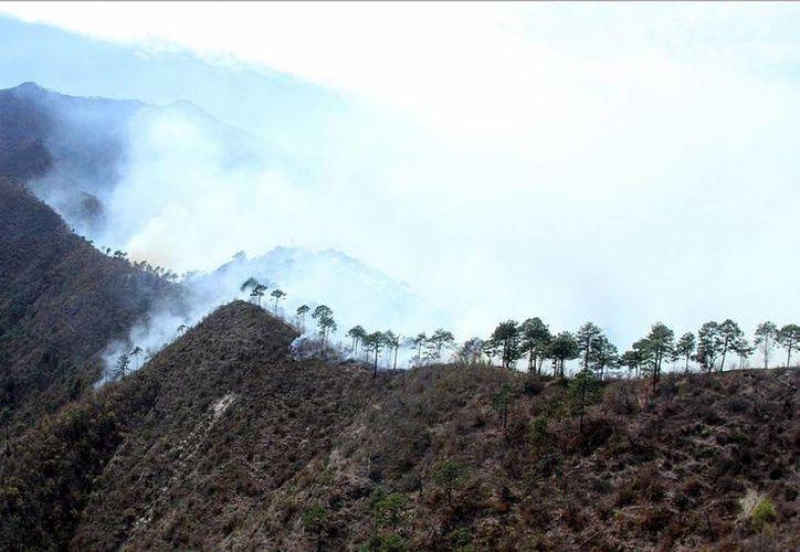 La Comisión Nacional Forestal redobla las acciones de combate y vigilancia en esta temporada de incendios. (Archivo/Notimex)