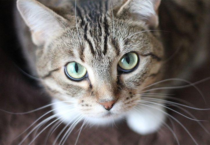 De 100 personas que tienen mascotas, aproximadamente 80 tiene perros y 20 gatos. (National Geographic).