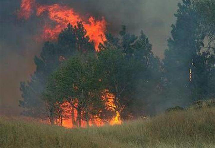 El incendio en Watermelon Hill, Washington, consume árboles. El clima ha ayudado a los bomberos a controlar el que ya es considerado el incendio forestal más grande de la historia de Washington. (Foto: AP/The Spokesman-Review, Colin Mulvany)