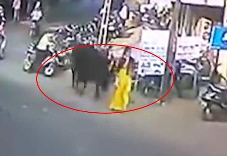 El animal la sorprendió por detrás por ese motivo ella no pudo percibir el ataque. (Foto: RT Noticias).