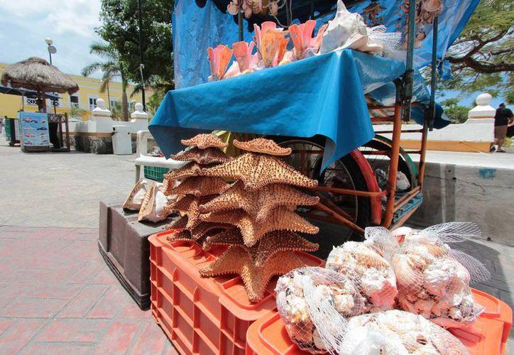 Autoridades municipales indican que no tienen facultades para sancionar a quienes comercializan estrellas de mar.  (Gustavo Villegas/SIPSE)