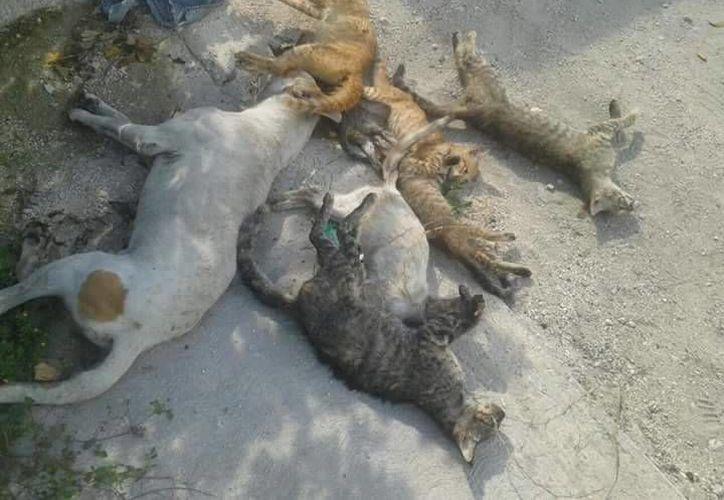Los habitantes reportaron que catorce gatos y dos perros fueron encontrados sin vida en la Región 233. (Cortesía/Facebook)