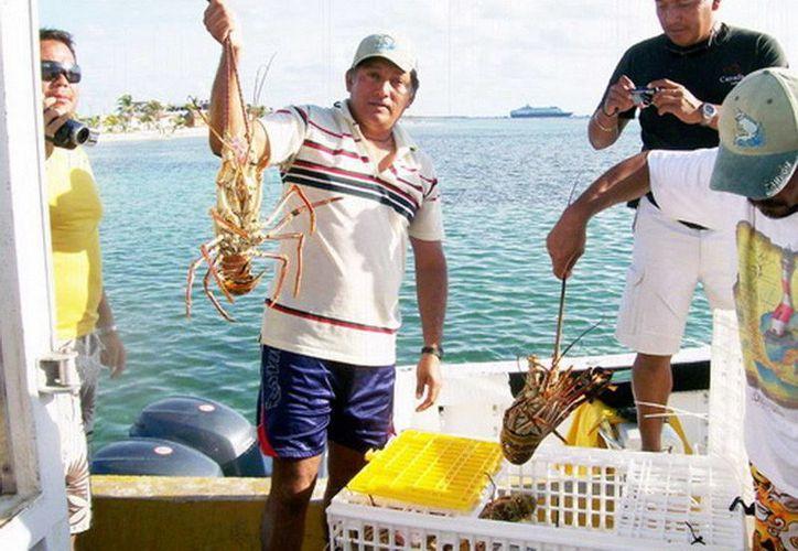 La captura de langosta viva en Quintana Roo se exporta a mercados asiáticos y europeos. (Redacción/SIPSE)
