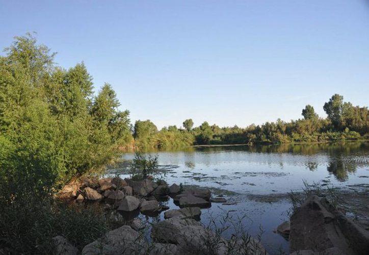 Los ríos Bacanuchi y Sonora fueron contaminados por el derrame de ácido sulfúrico. (Notimex)