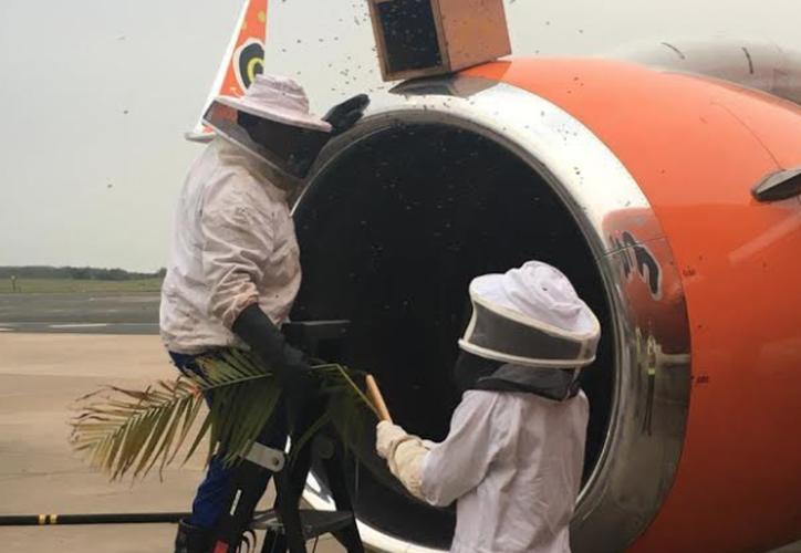 Los empleados del aeródromo no permitieron a los apicultores utilizar sus medios usuales porque podían dañar el avión. (Foto: Mango Airlines)
