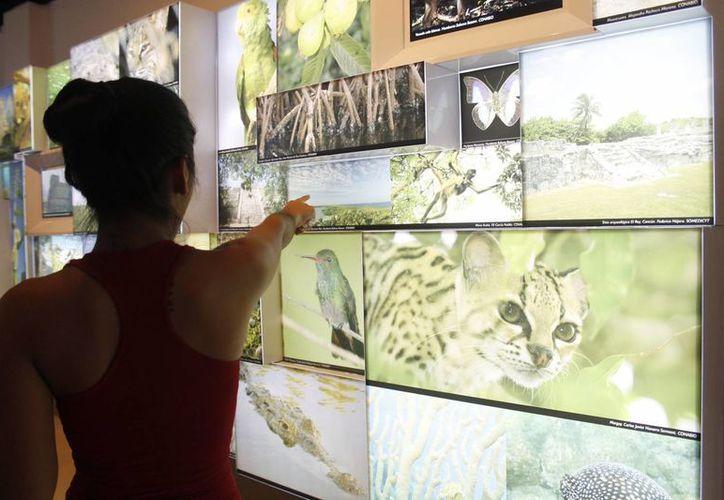 Durante le fin de semana el planetario registra un aproximado de 300 visitantes. (Jesús Tijerina/SIPSE)