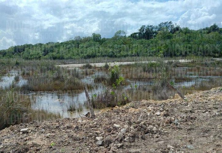 La inspección ocular del Acuario Agrario suspenderá cualquier acción de relleno de sascab del manglar, debido a que está dañando al sistema lagunar en Bacalar. (Foto: Javier Ortiz/SIPSE)