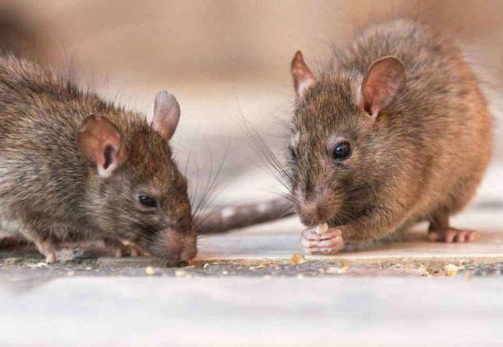 La maestra de los menores dejó el veneno para ratas en la mesa para ahuyentar a los roedores. (Foto: Contexto)