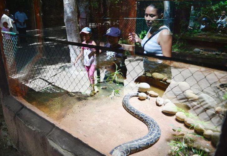 El zoológico del Centenario tiene amplia variedad de animales como el serpentario que es muy visitado. (Milenio Novedades)