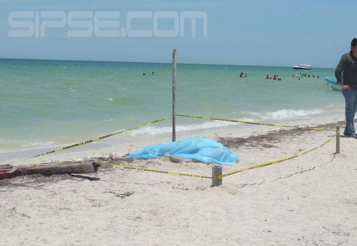 El cuerpo del señor quedó tirado en medio de la playa. (G. Keb/Milenio Novedades)