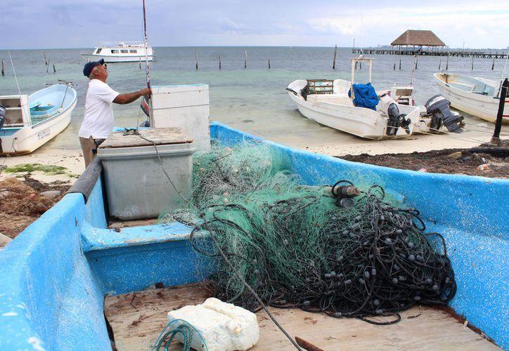 La pesca de tiburón está permitida, pero hay mucha presión internacional porque ya no quieren que se capturen. (Foto: Redacción/SIPSE)