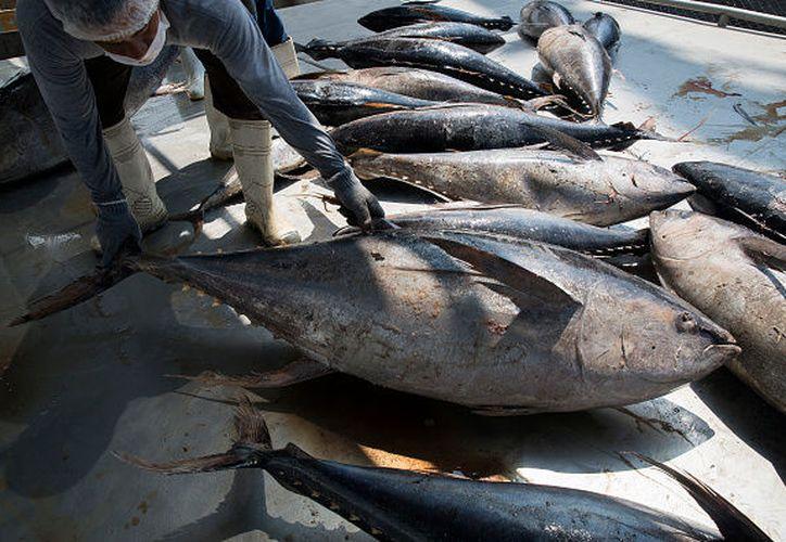 Los desacuerdos por el comercio de atún entre ambos países remontan a la década de los 80. Foto: (Televisa News)
