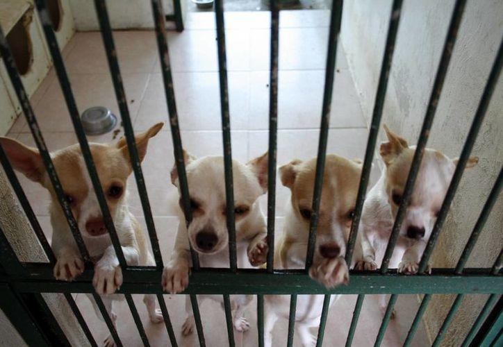 Cada vez más gente deja a sus mascotas en los albergues caninos. (Milenio Novedades)