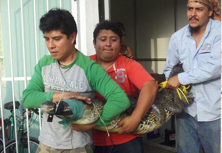 'Floyd' fue llevado a las oficinas de Ecología del puerto. (Imagen de contexto/SIPSE)