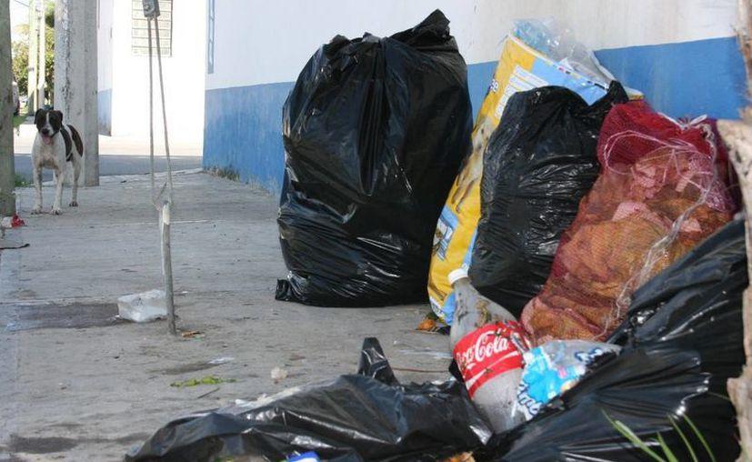 El proyecto de tratamiento de basura debe tener un plan de contingencia. (Adrián Barreto/SIPSE)