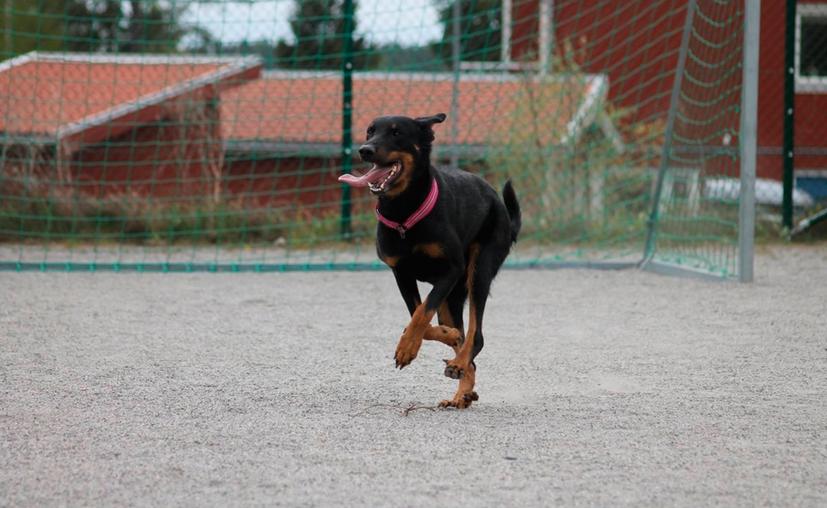 Al intentar escapar, los perros lo persiguieron hasta alcanzarlo para después morderlo en diversas ocasiones provocándole las heridas. (Contexto Pxhere)