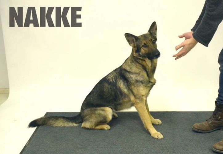 Nakke esperó paciente a que la galleta apareciera de nuevo. (Captura de pantalla)