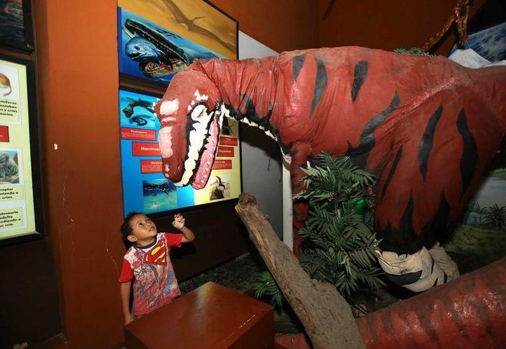 El Museo de Historia Natural es una buena opción para visitar en estas vacaciones. (SIPSE)