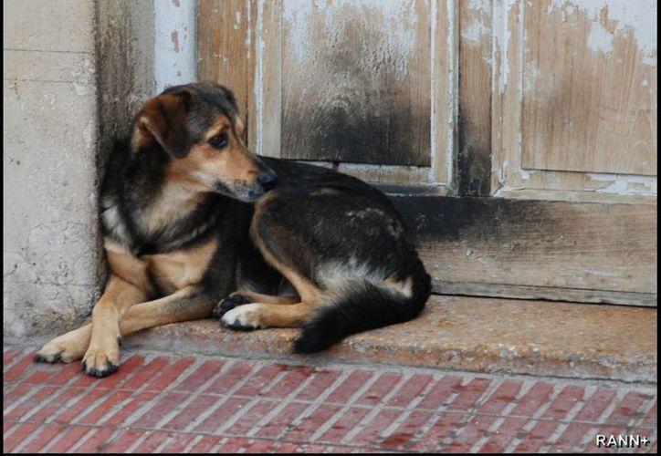 Una ley que se pretende aplicar en Galicia, España, busca penalizar a quienes alimenten a animales de la calle. (Contexto/Internet)