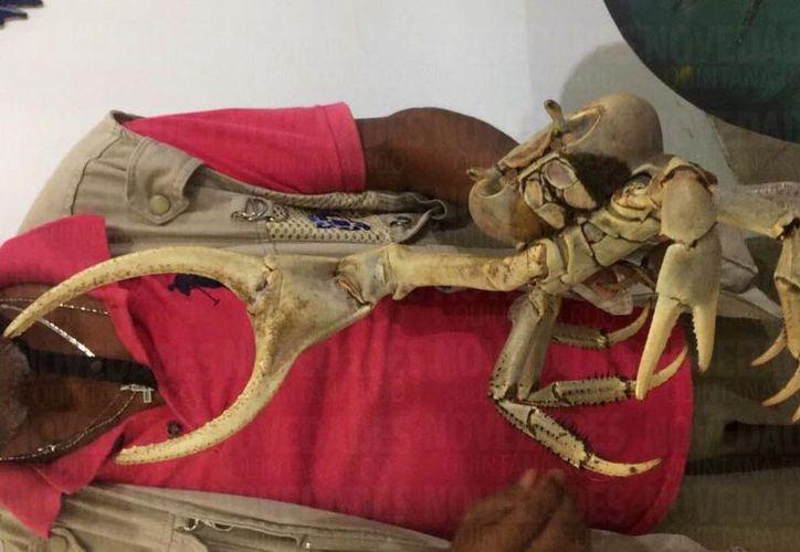Un ciudadano que viajaba en su moto rescató al cangrejo y lo entregó a autoridades ambientales. (Foto: Redacción)