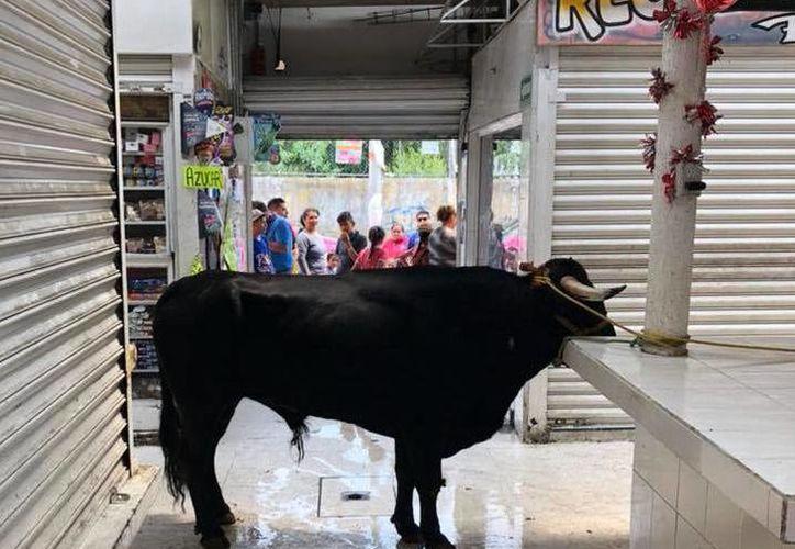 En la tradicional 'Tlaltenconada' en San Francisco Tlaltenco, uno de los toros escapó y se metió al mercado. (Foto: Redes sociales)