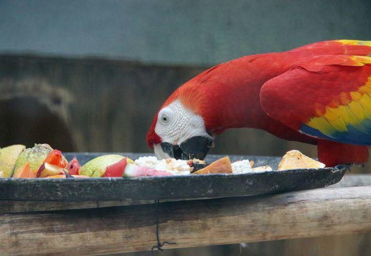 Los animales reciben una alimentación balanceada. (Milenio Novedades)