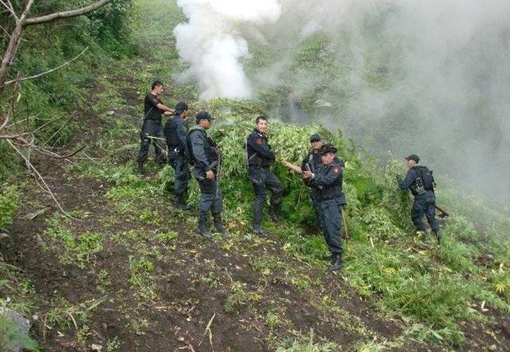 Los campos destruidos estaban en Cadete Boquerón, en una zona boscosa paraguaya ubicada a 20 kilómetros de la frontera con Brasil. (rpp.com.pe)