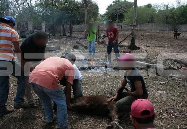 Piden acudir al Rastro Municipal para la matanza de animales, en lugar de realizar esto en los domicilios.  (Archivo/SIPSE)