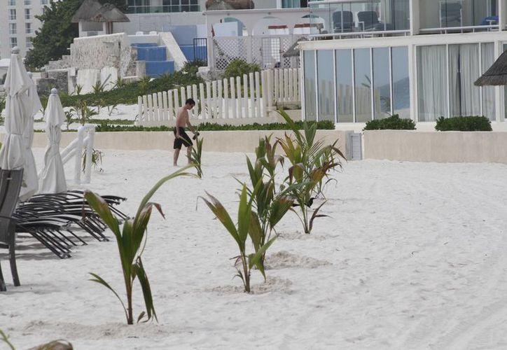 Las palmeras necesitan supervisión y cuidados para su crecimiento. (Sergio Orozco/SIPSE)