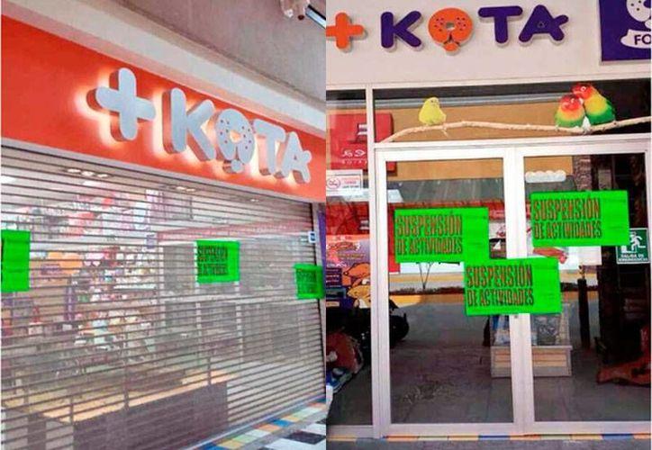 Profepa aseguró especies animales en 30 tiendas de la firma +Kota, ubicadas en 25 estados y el Distrito Federal. (Twitter @MVS)