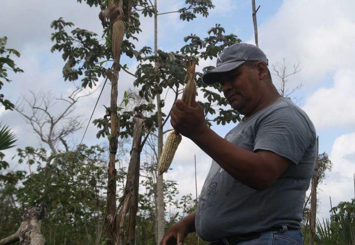 Las actividades se desarrollarían en la zona ejidal. (Octavio Martínez/SIPSE)