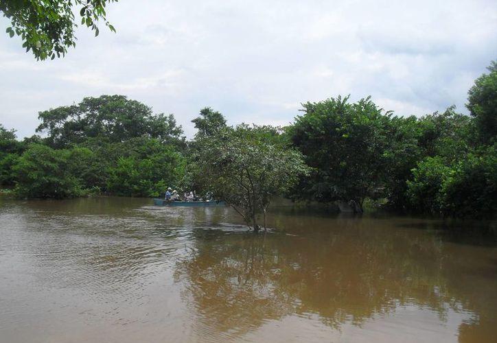 Se detectó la presencia de contaminantes por aguas residuales, herbicidas y plaguicidas. (Harold Alcocer/SIPSE)