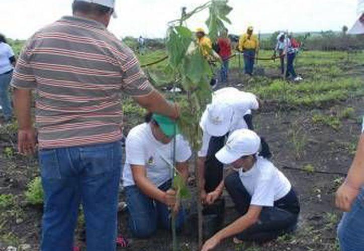 Se realizan proyectos de educación ambiental en todos los municipios del estado. (Redacción/SIPSE)