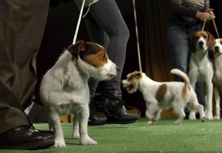 Los creadores de Dog TV se apoyan en una encuesta de American Kennel Club y la marca de comida para perros IAMS. (Archivo/EFE)