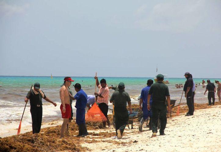 La Dirección de la Zofemat dispone de cuadrillas de trabajadores para mantener limpios los arenales de la costa playense. (Octavio Martínez/SIPSE)
