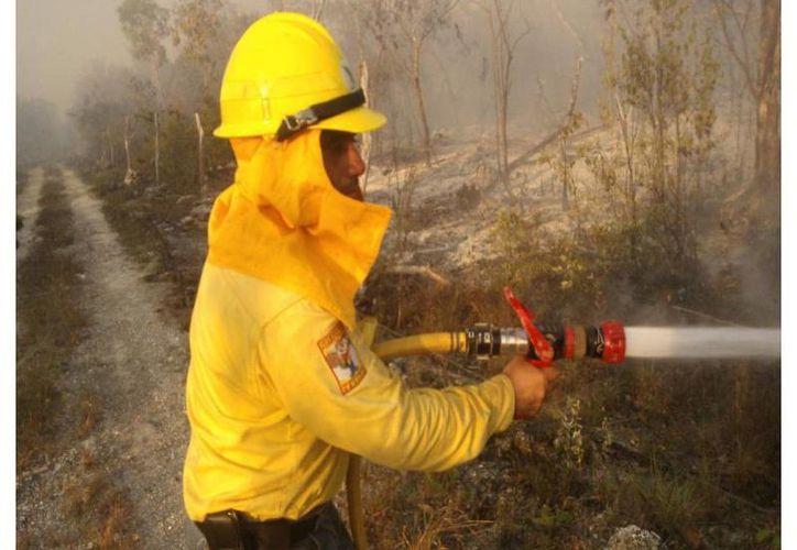 La situación se torna complicada para los 58 brigadistas que atienden los incendios. (Archivo/SIPSE)