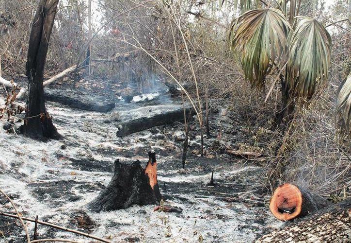 Diversas zonas de Quintana Roo ha sido afectadas por incendios. (Edgardo Rodríguez/SIPSE)